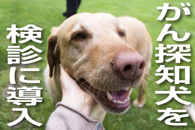 がん探知犬